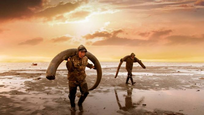 Siberian hunters with tusks of wooly mammoths on the remote island of New Siberia.